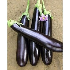 Баклажан Длинный Фиолетовый ( 10 шт. семян )