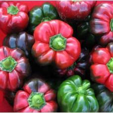 Перец Гогошар крупный сладкий ( 10 шт. семян )