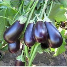 Баклажан Прадо f1 ( KS 27 ) 10 шт. семян