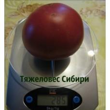 Томат Тяжеловес Сибири. (10 шт.семян)