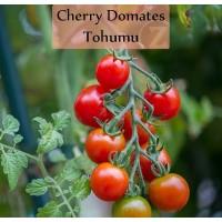 Томат Tohumu Cherry ( Турция ) ( 10 шт. семян )