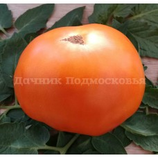 Томат Оранжевый краш (Orange Crush) США (10 шт. семян )