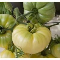 Томат Белый Воск (White Wax) 10 шт. семян