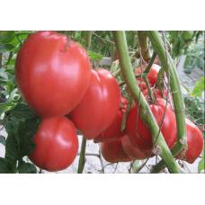 Томат Бычье Сердце кистевое ( 10 шт. семян )