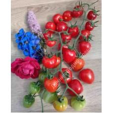 Томат Томатоберри (Tomatoberry)  (10 шт.семян)